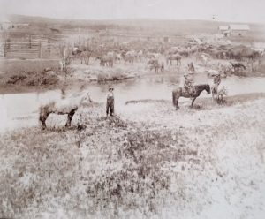 Wranglers by Charbonneau Creek