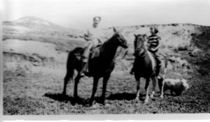 PAM horse (2)